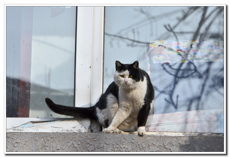 老张喜爱摄影作品:窗前猫