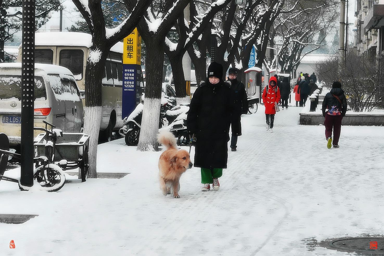 老张喜爱摄影作品:回忆北京去年的那场雪