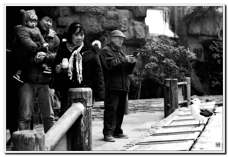 老张喜爱摄影作品:逛动物园的一家人