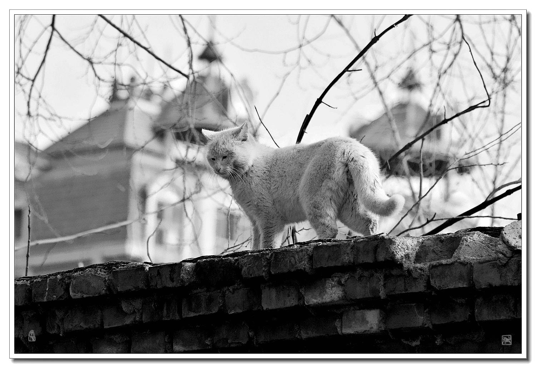 老张喜爱摄影作品:墙头猫