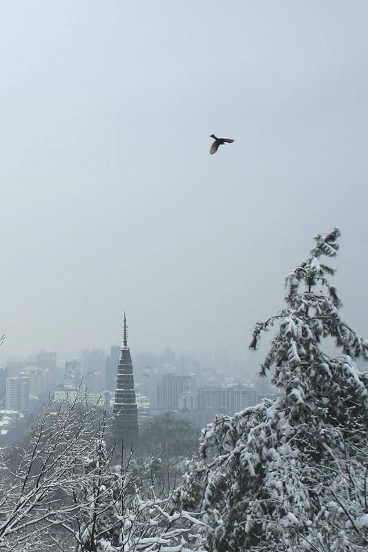 驼腰作品:宝俶鸟飞雪