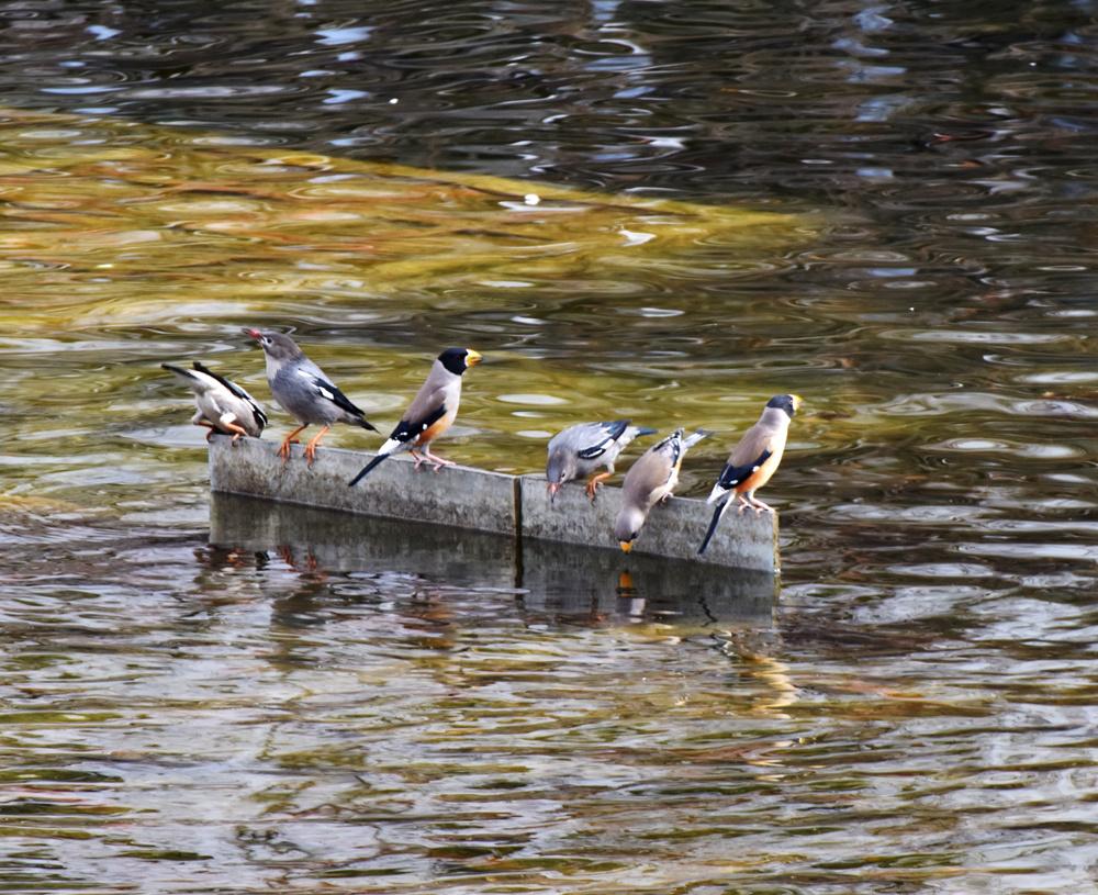 canoe53作品:群鸟