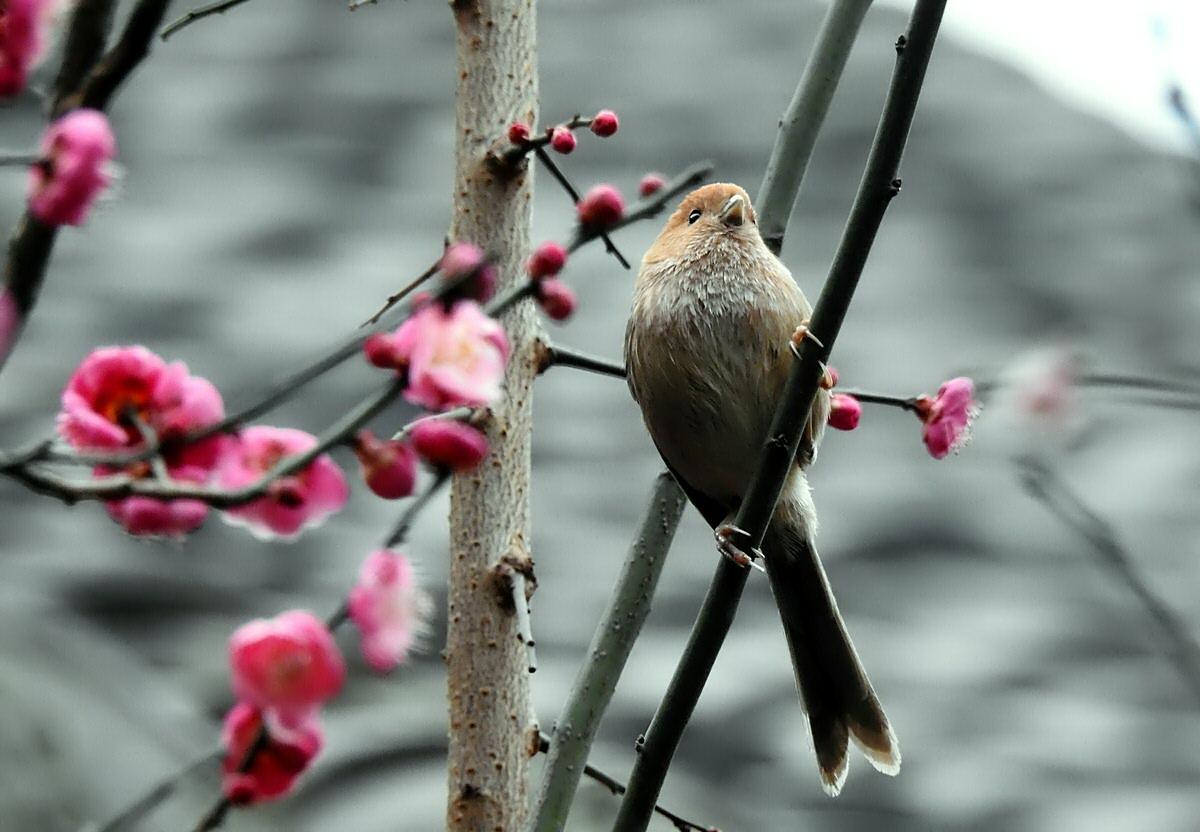 panshiyuan作品:春回大地---