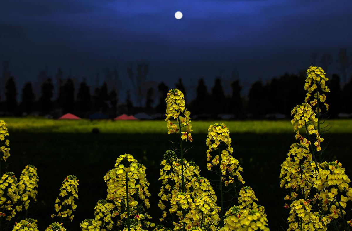 空空雨人作品:春之夜