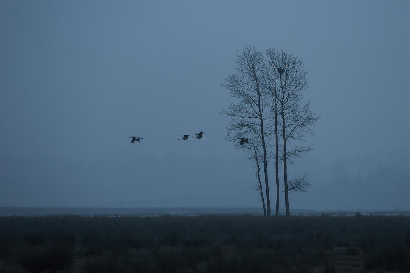 李达明作品:湿地的早晨