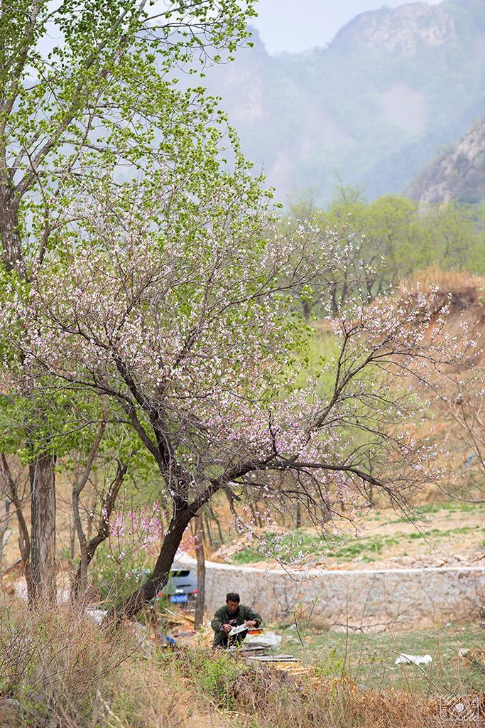 镜缘WY001作品:养蜂人的春天