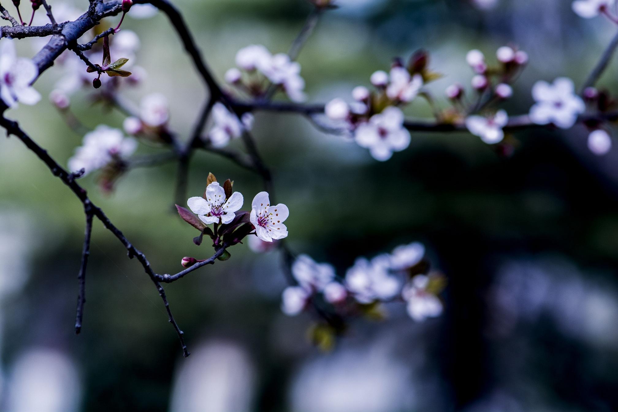 定焦手作品:早春