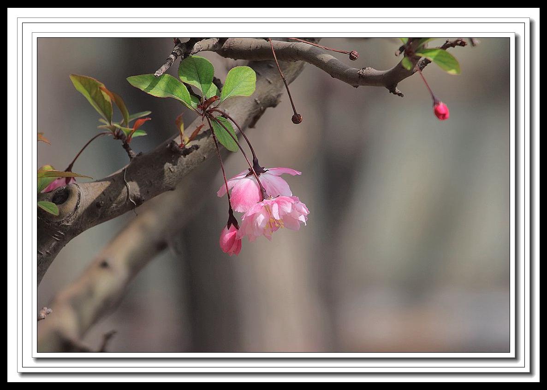千龙1作品:花儿静静地开
