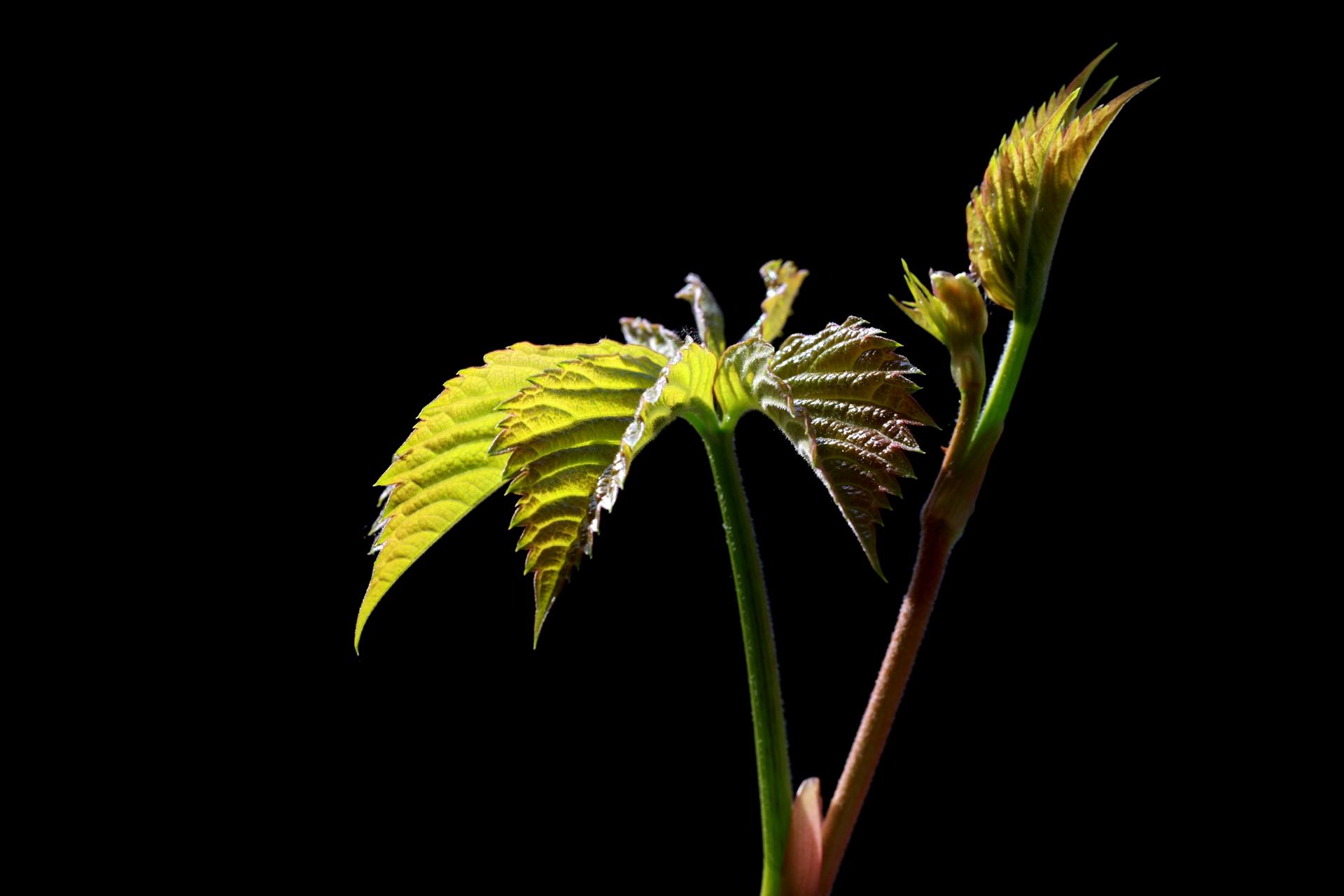 单一一作品:叶子