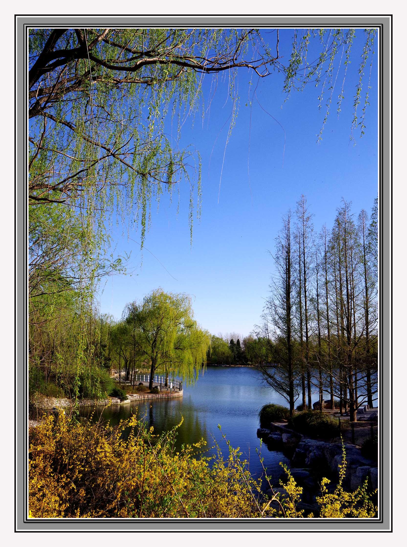 新学员作品:北京植物园