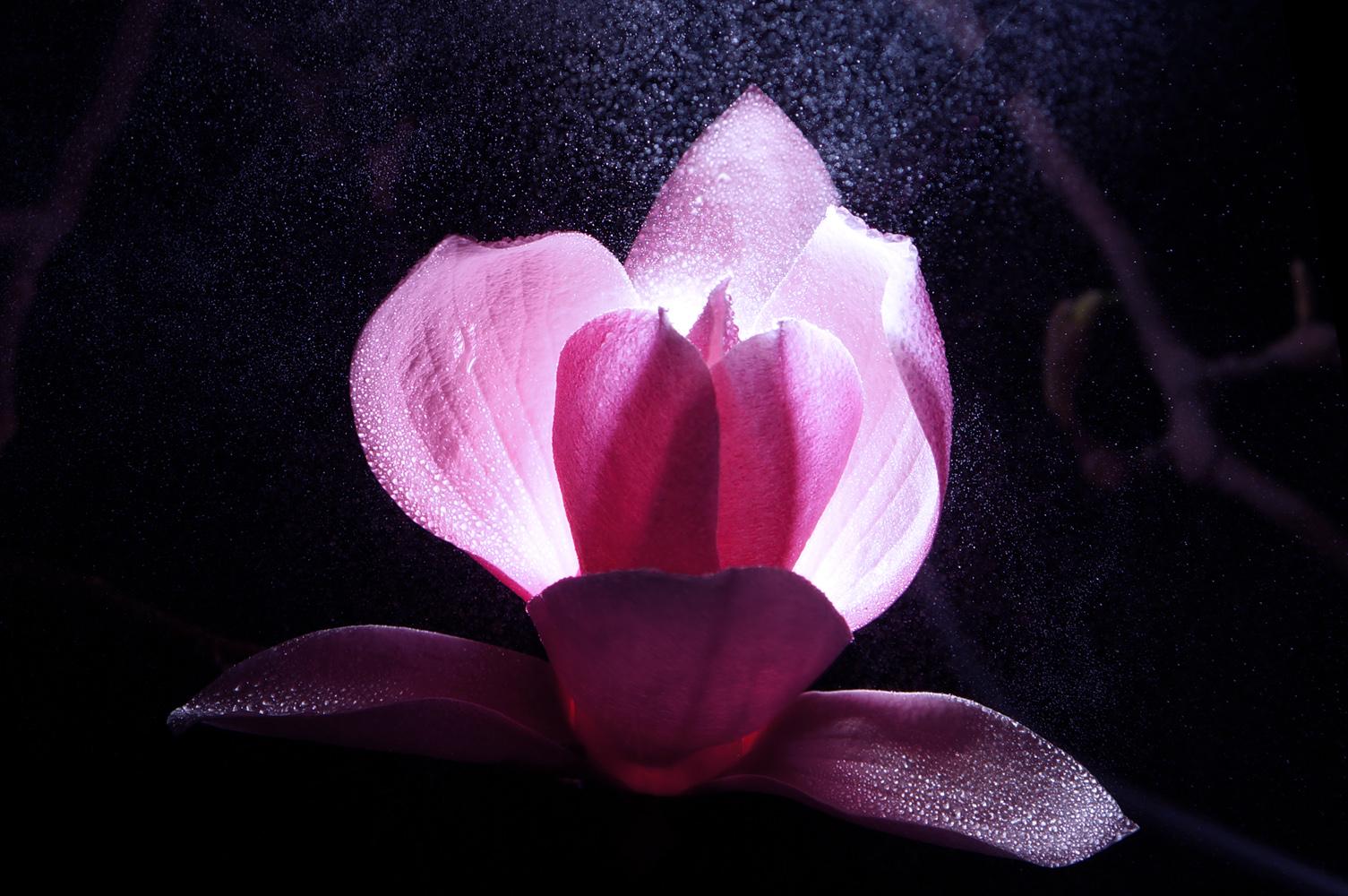 心色彩作品:雨中的红玉兰