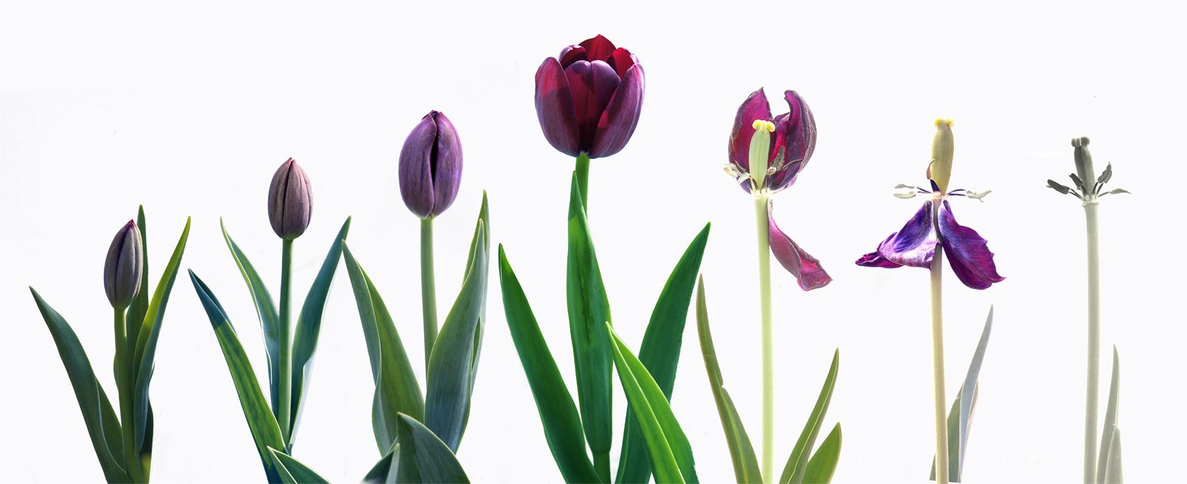 心色彩作品:花开花落