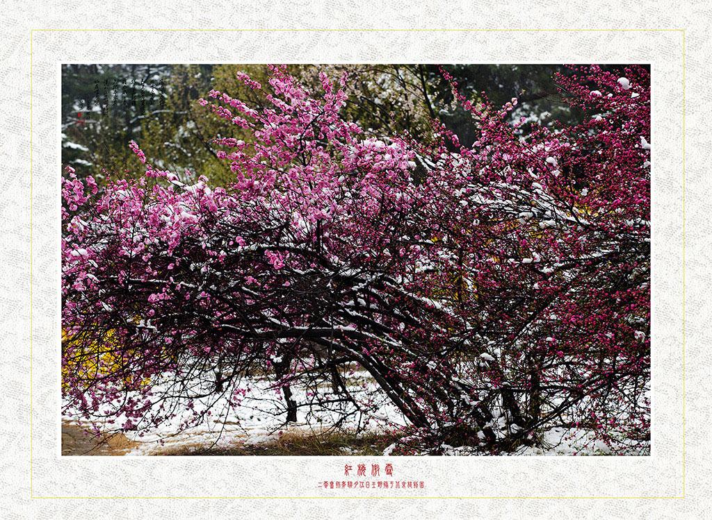 镜缘WY001作品:红梅傲雪