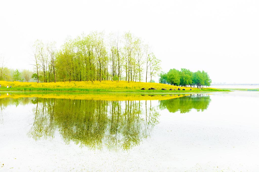 华野四纵作品:春色又抹江南岸