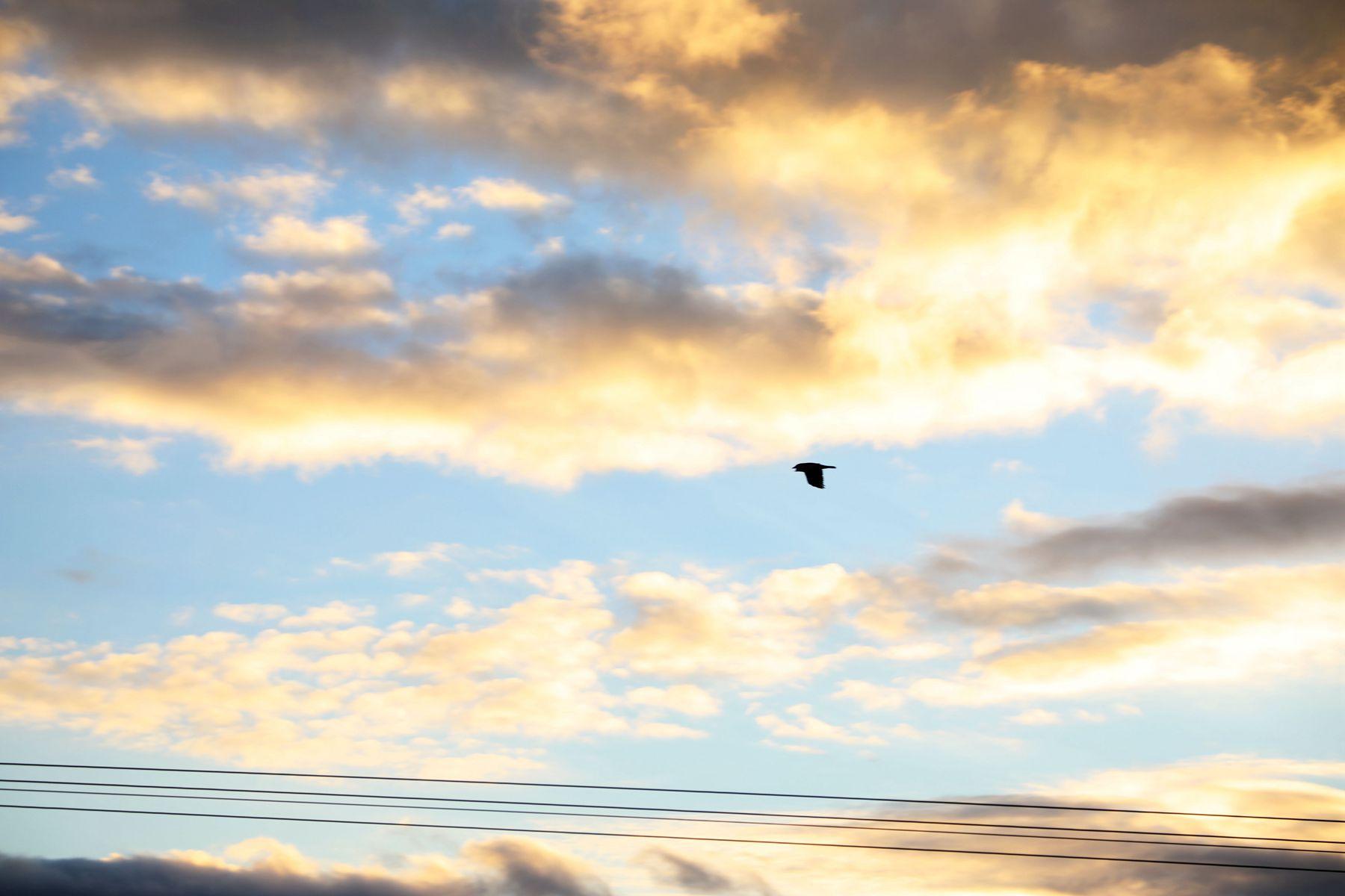 追月8648作品:墨尔本的霞色天空