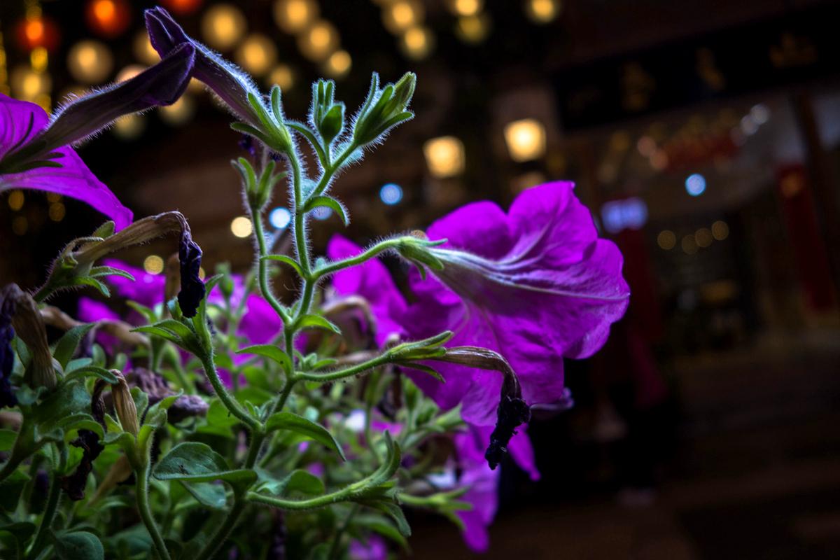 菠萝菠萝蜜蜂作品:夜.花