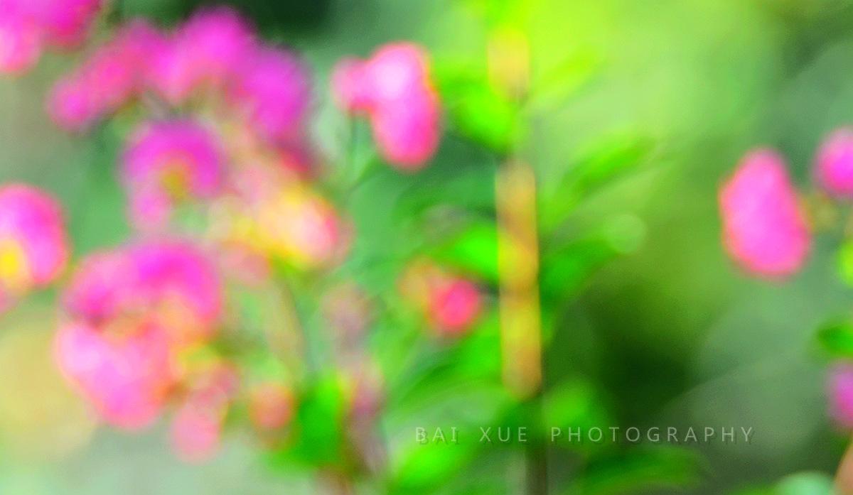 白雪摄影作品:《紫薇花》