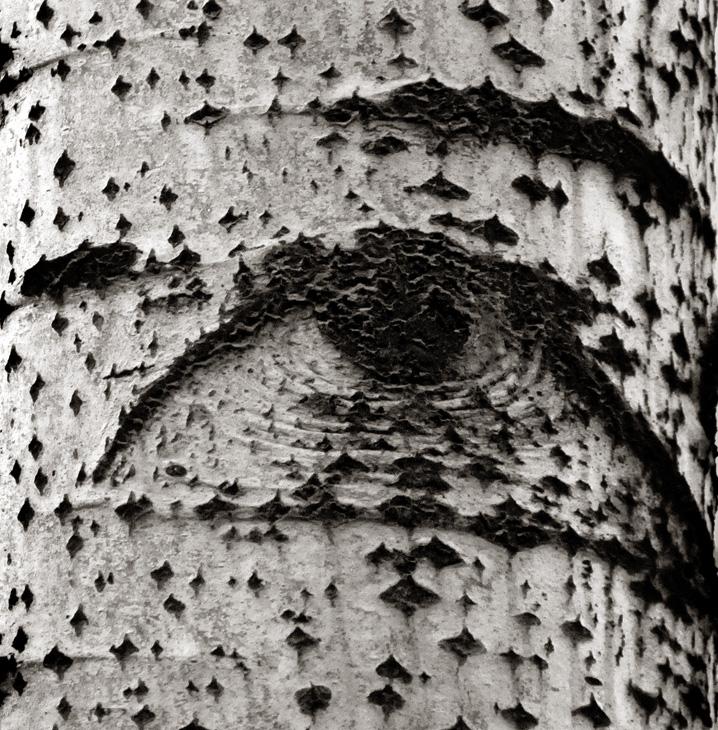 达顿作品:树眼