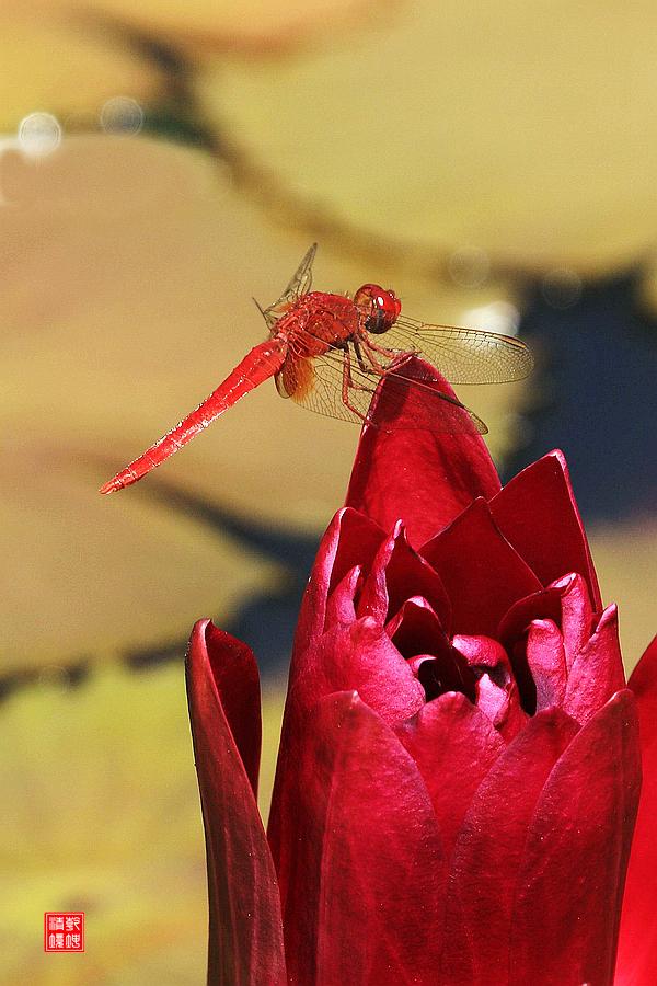 乾坤清境作品:红蜻蜓