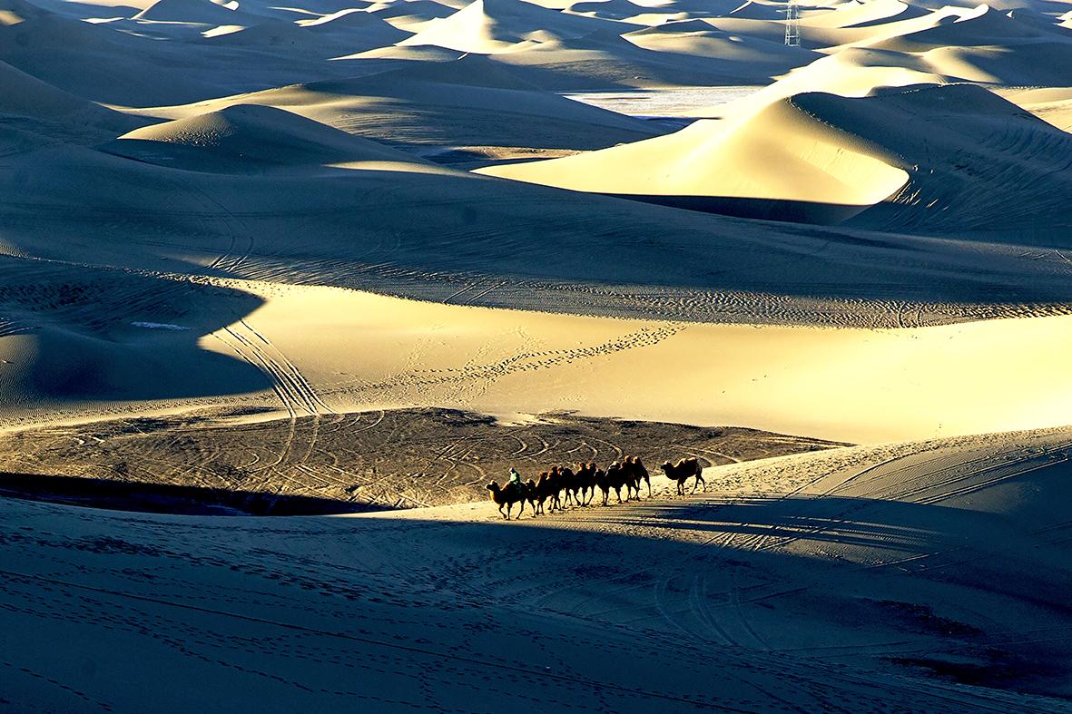 TS灯火作品:沙漠驼影