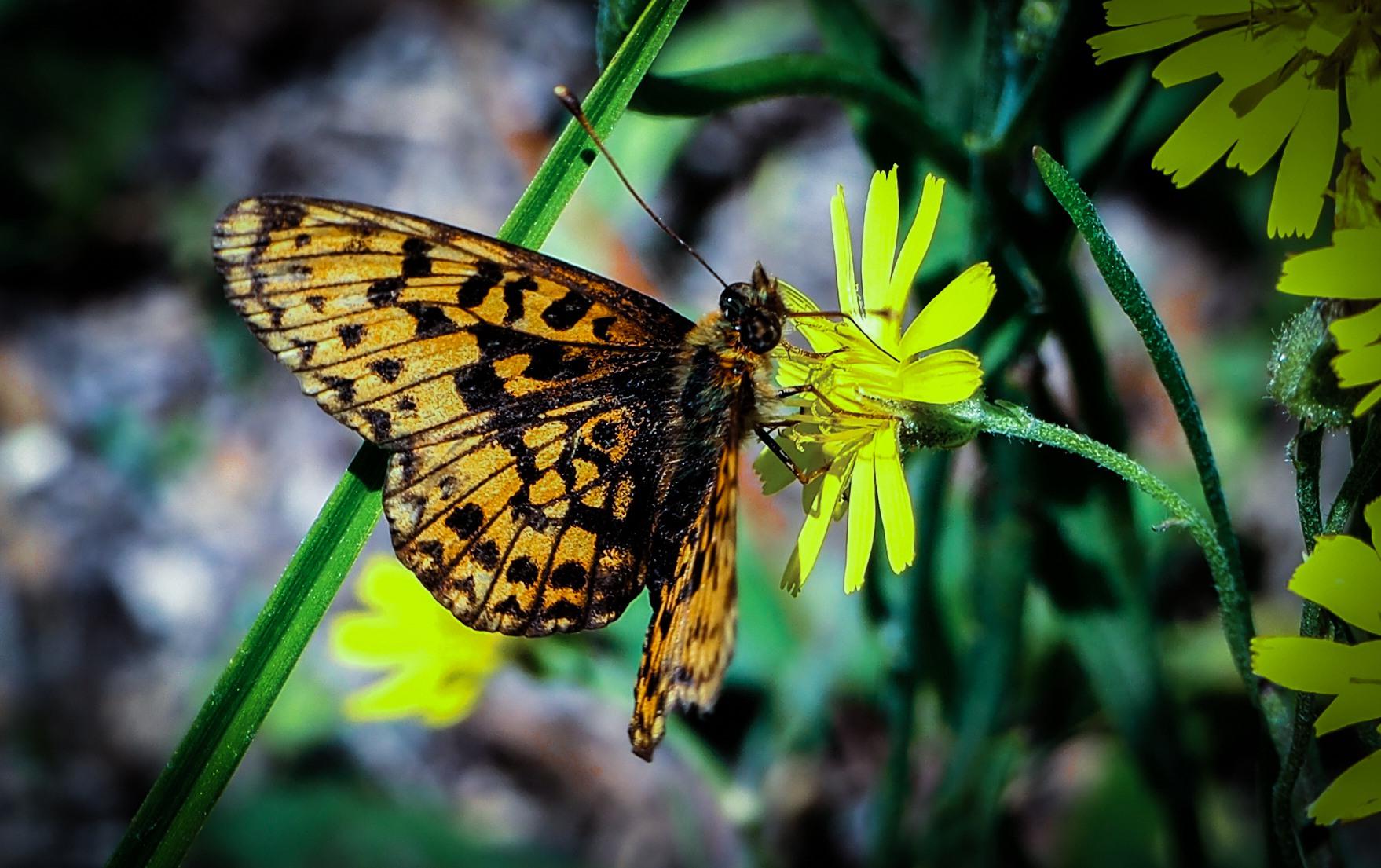 北国林枫作品:花与蝴蝶