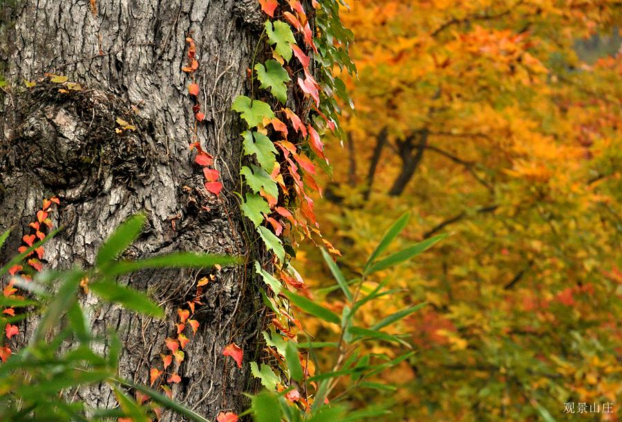 观景山庄作品:秋色