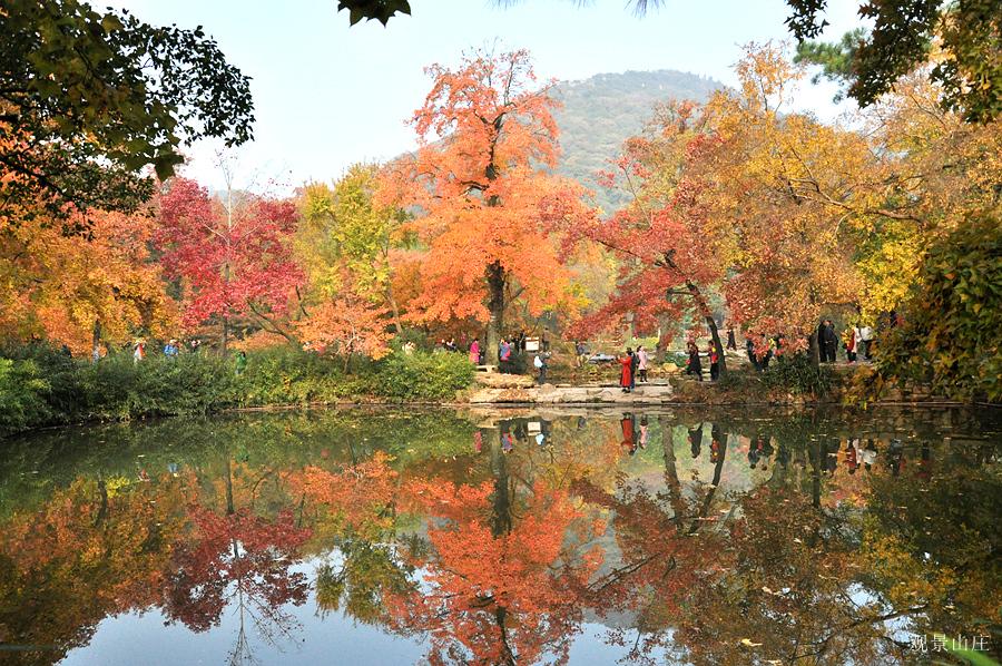 观景山庄作品:枫叶红