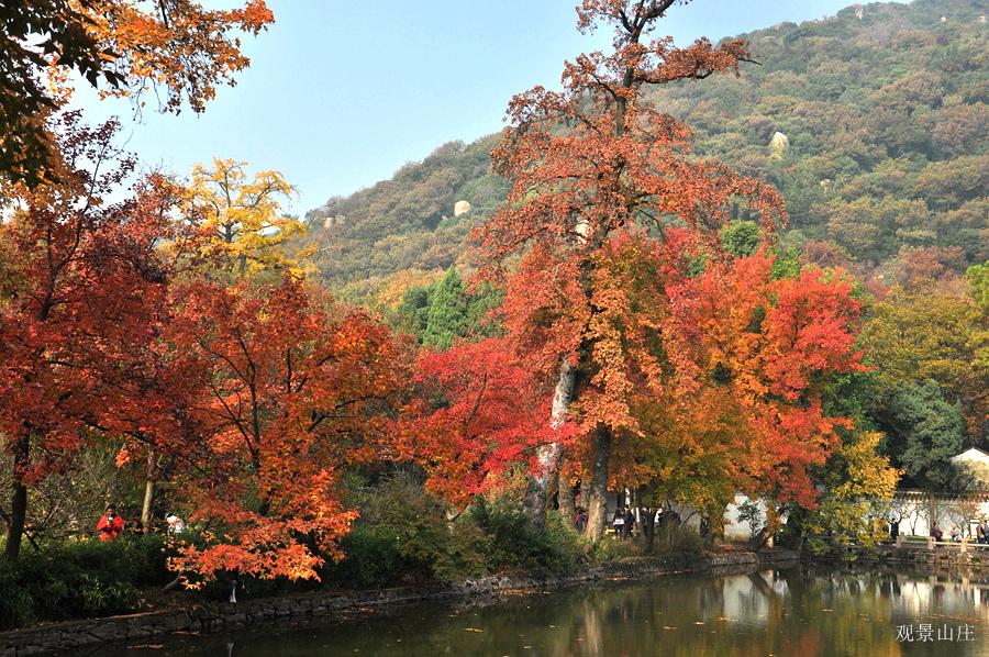 观景山庄作品:红枫
