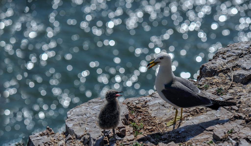 盛世太平2作品:海鸥