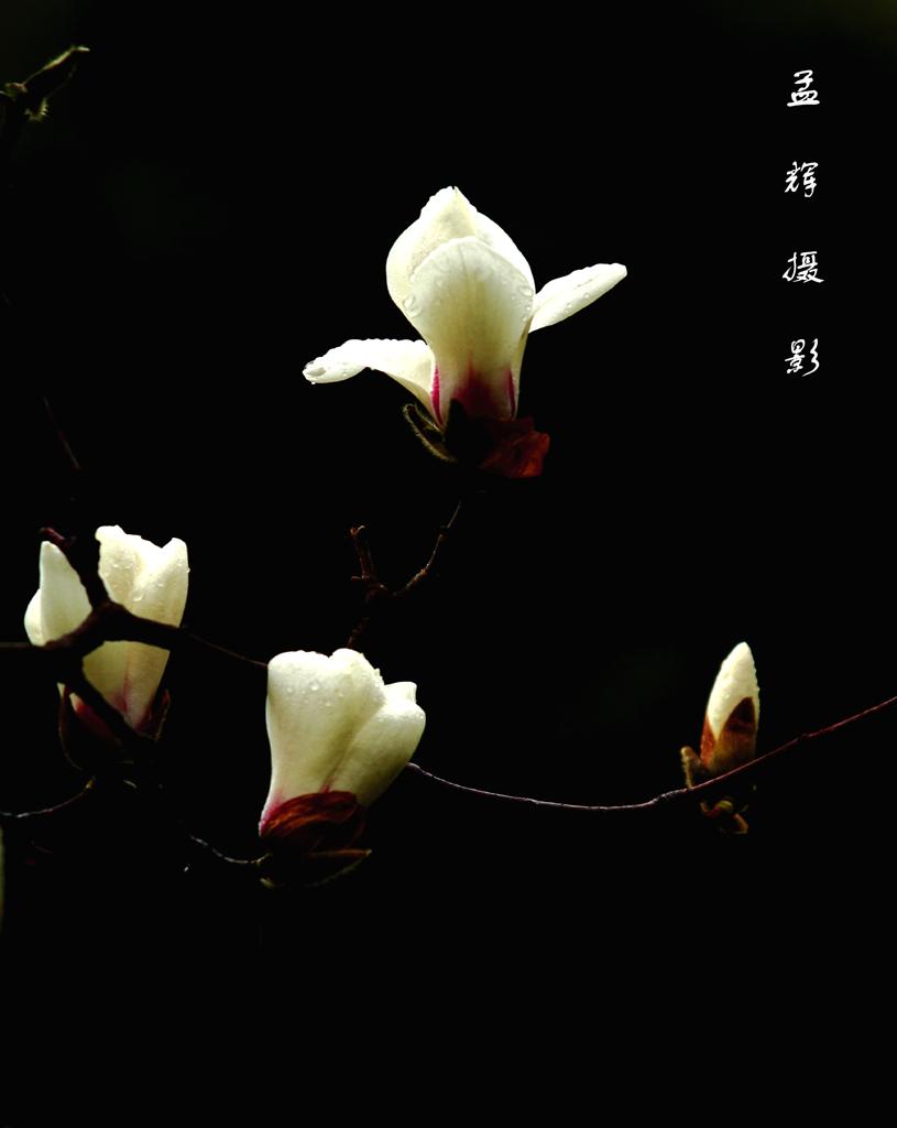 孟辉作品:春花