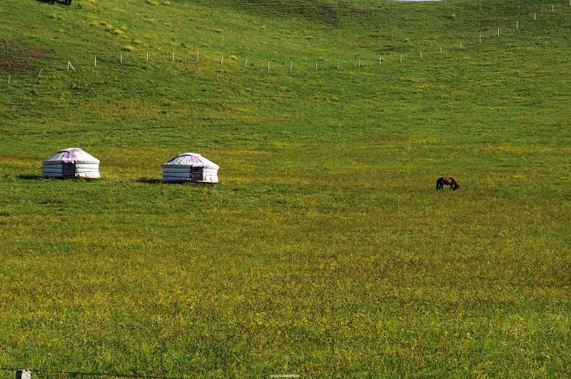 激动的心作品:草原的家