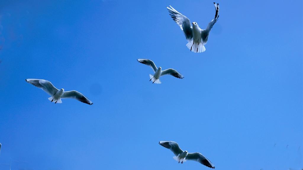 lihuizhi作品:海鸥