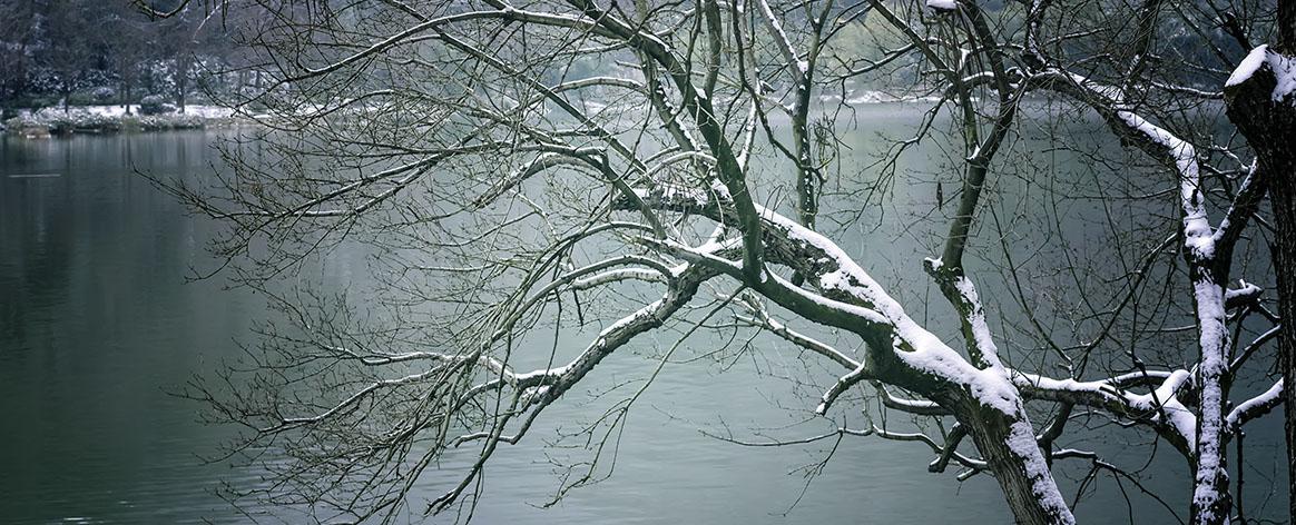 wanwou作品:雪压湖畔树