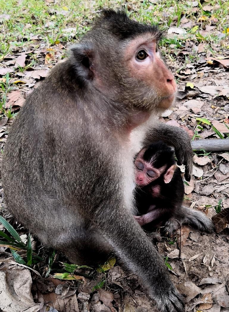 欧阳川作品:母猴和它的宝宝