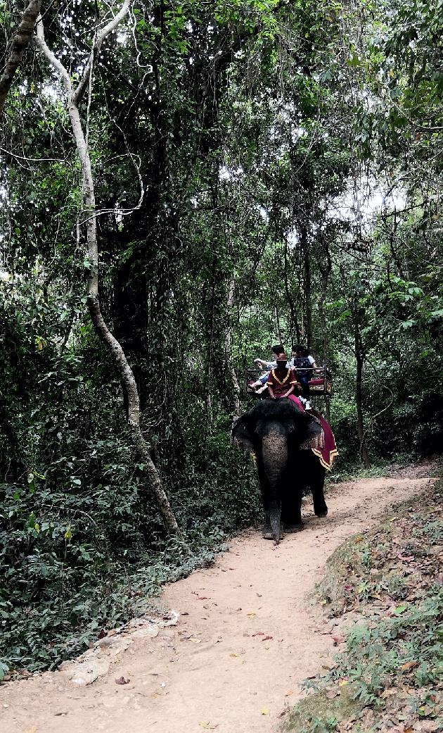 欧阳川作品:古象国的黑象