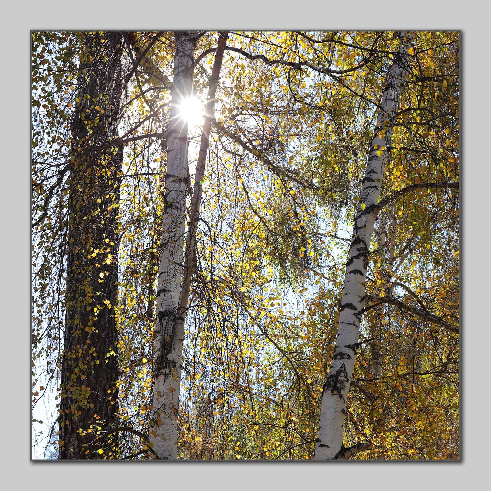 冰尘作品:树影婆娑