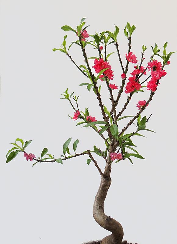 奥巴牛作品:鲜花迎春