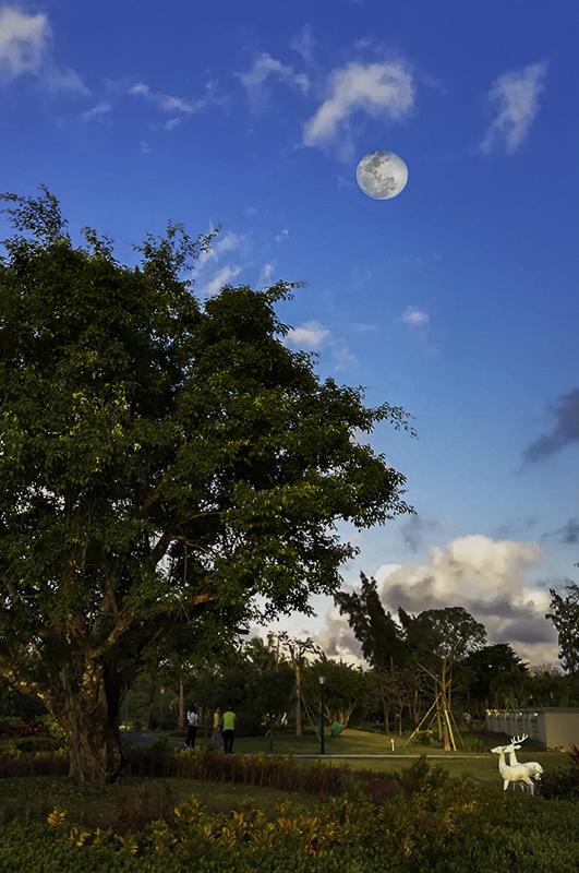 奥巴牛作品:手机望明月