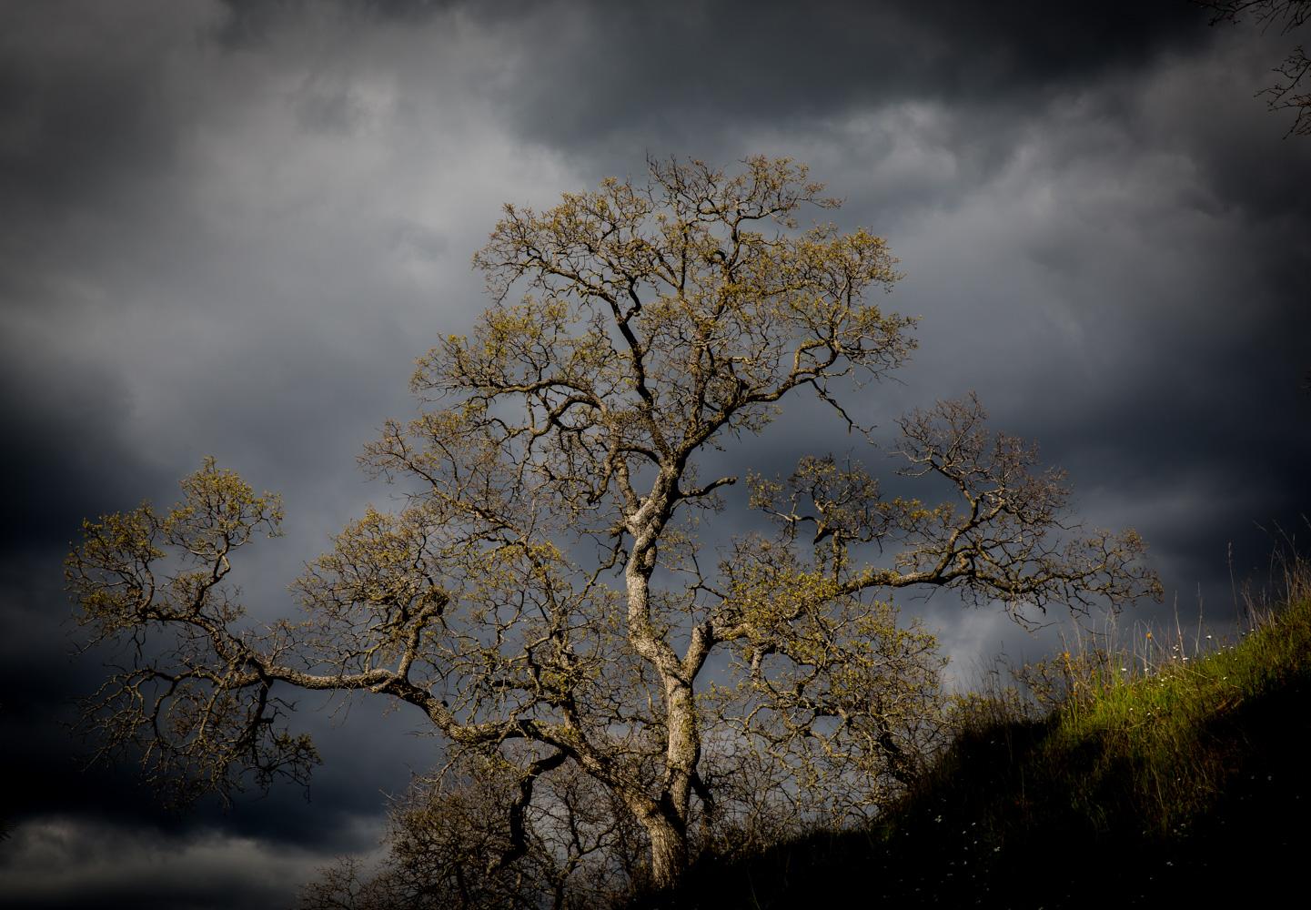 redrock2011作品:三月春暖