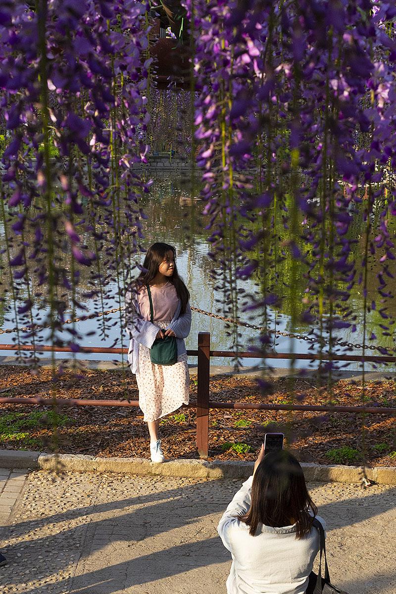 钟乳石作品:紫藤花下