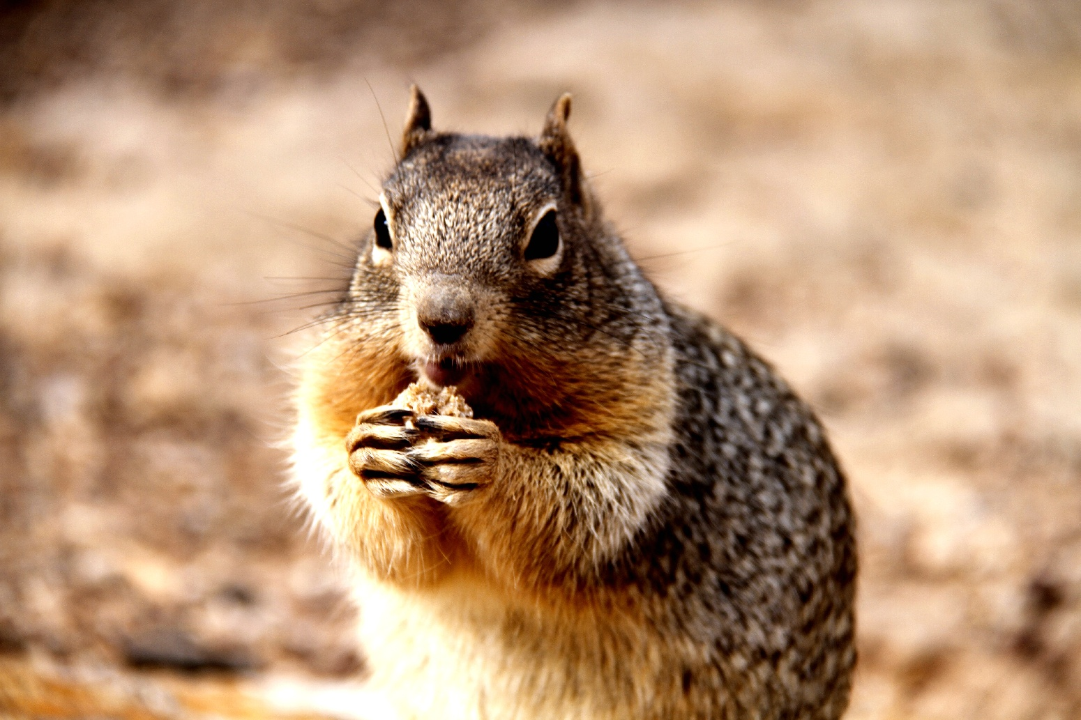 怎么回事566作品:进食中的松鼠