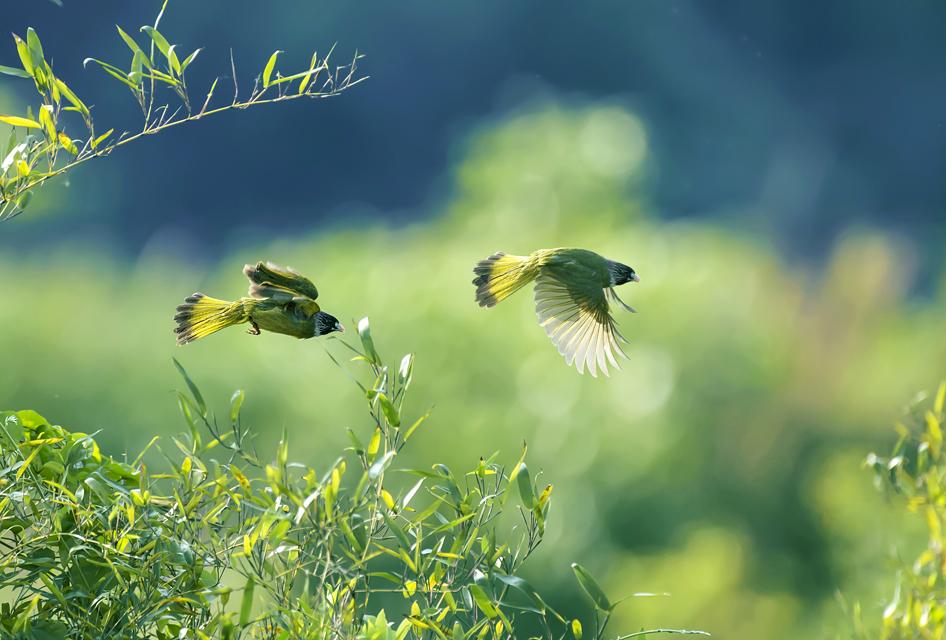 周厚瑶作品:竹园飞鸟