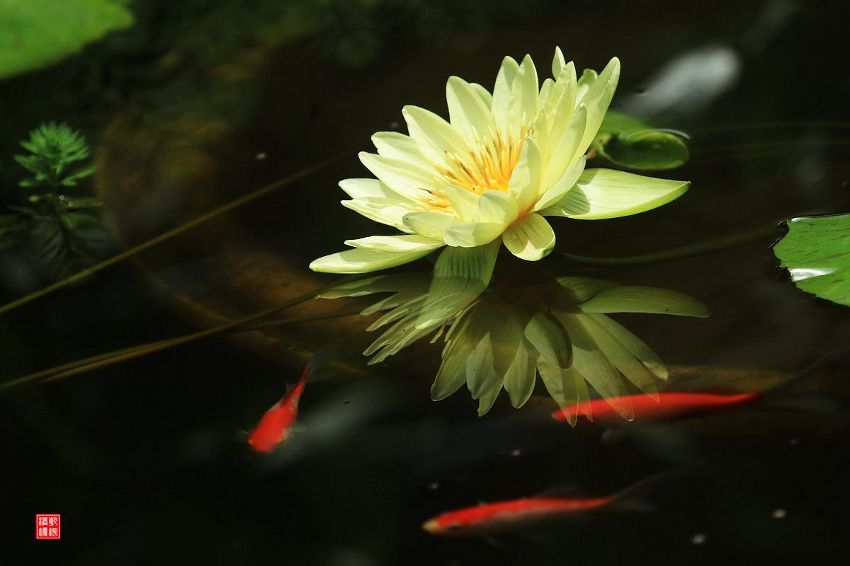 乾坤清境作品:黄金国