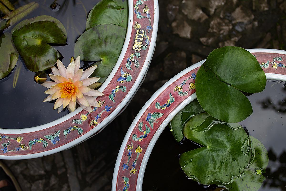 钟乳石作品:睡莲的构图