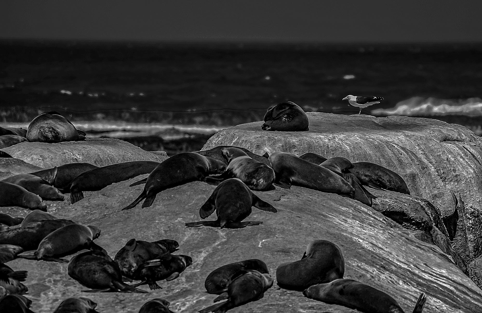 阿番作品:海豹岛