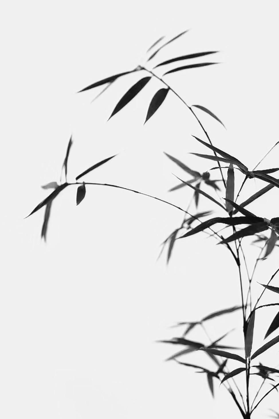 欢乐谷一号作品:风吹细细香
