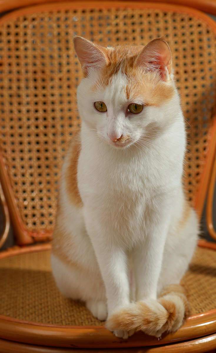旅行者1971作品:椅子上的猫