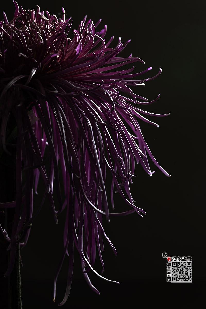 钟乳石作品:冷艳菊花
