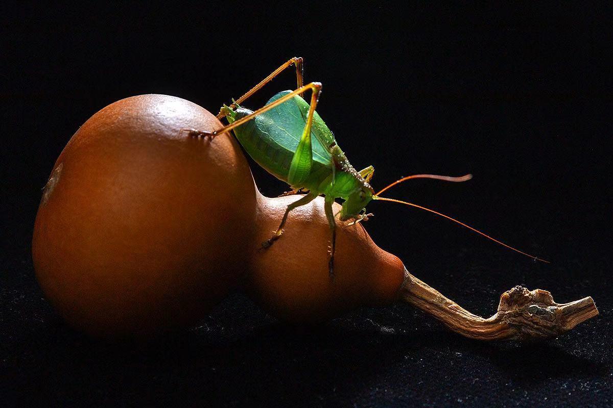 钟乳石作品:秋虫