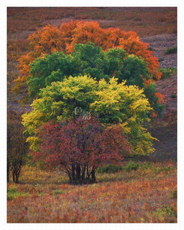 Tyler作品:树